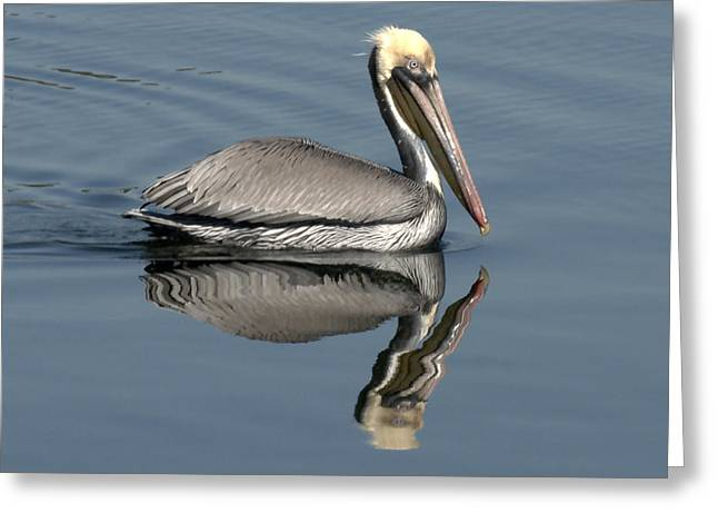 Mirror Pelican Greeting Card