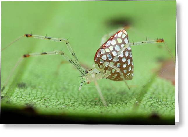 Mirror Spider Greeting Card by Melvyn Yeo