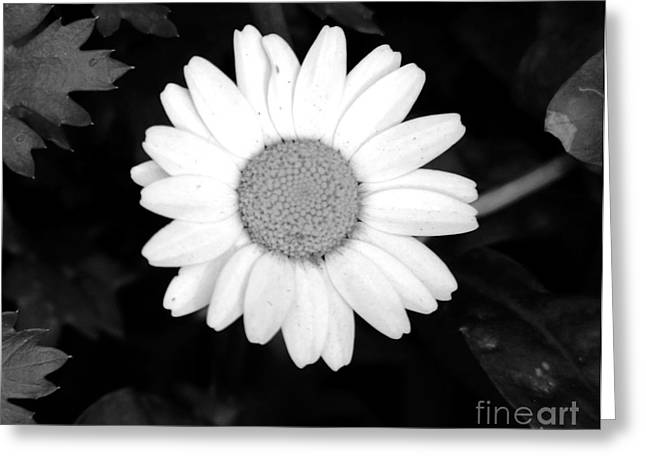 Miss Daisy Greeting Card by Andrea Anderegg