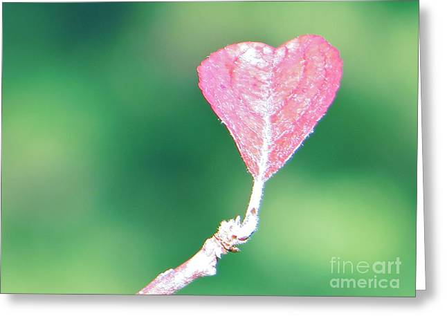 Miss Lonely Heart Greeting Card by Joy Hardee