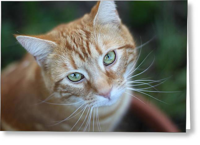 Miss Lucy Mcgillicuddy Greeting Card by Melanie Lankford Photography