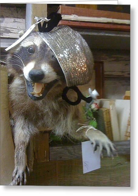 Miss Raccoon Greeting Card by Linda L  Brobeck