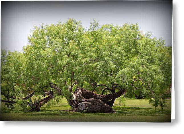 Mission Espada - Tree Greeting Card