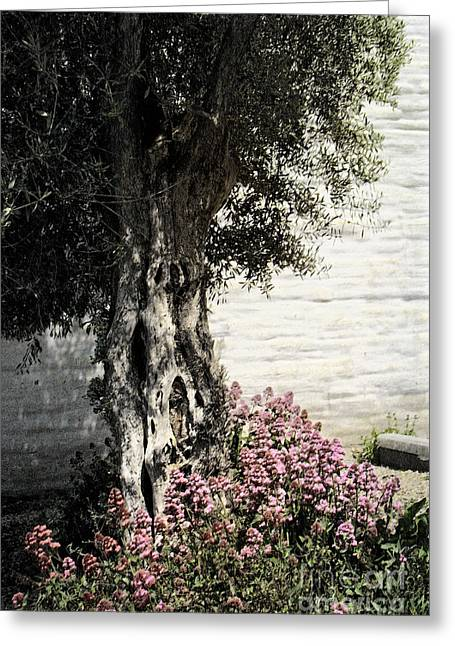 Greeting Card featuring the photograph Mission San Jose Tree Dedicated To The Ohlones by Ellen Cotton