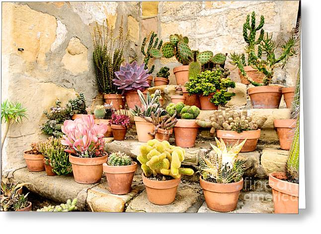 Greeting Card featuring the photograph Mission Succulents by Vinnie Oakes