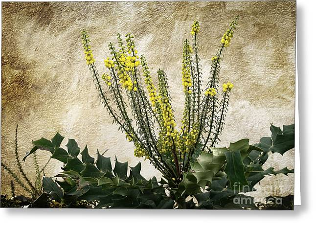 Greeting Card featuring the photograph Mission Wallflower by Ellen Cotton