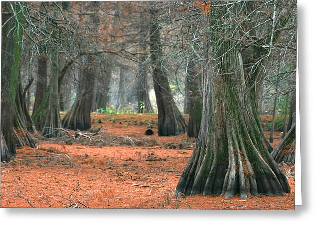 Mississippi Cypress Greeting Card