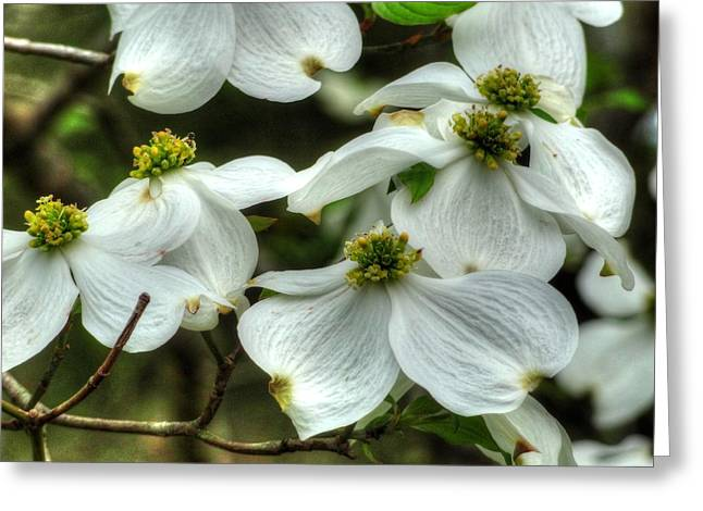 Greeting Card featuring the photograph Mississippi Dogwood II by Lanita Williams