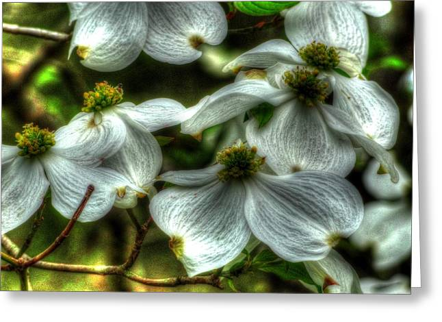 Greeting Card featuring the photograph Mississippi Dogwood by Lanita Williams
