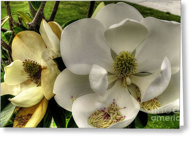 Mississippi Magnolia Greeting Card