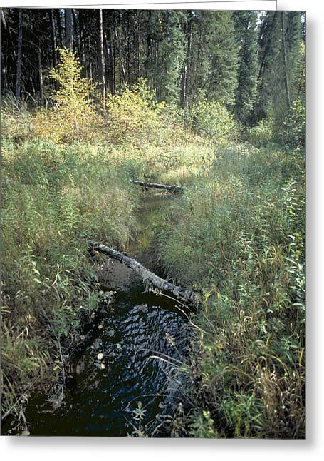 Mississippi River Headwaters Greeting Card
