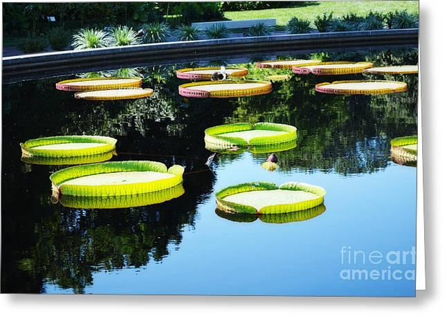 Missouri Botanical Garden Giant Lily Pads Greeting Card