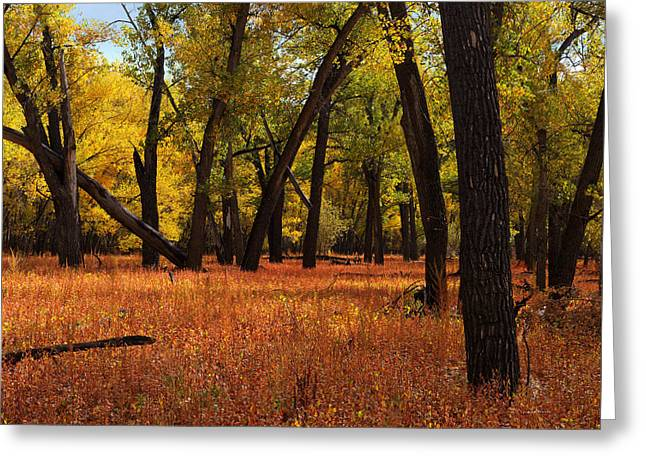 Missouri Rivebank Autumn Greeting Card