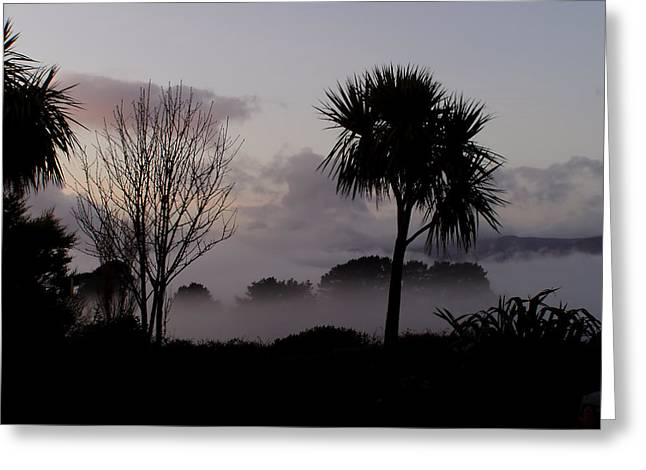 Mist And Palmtree Greeting Card