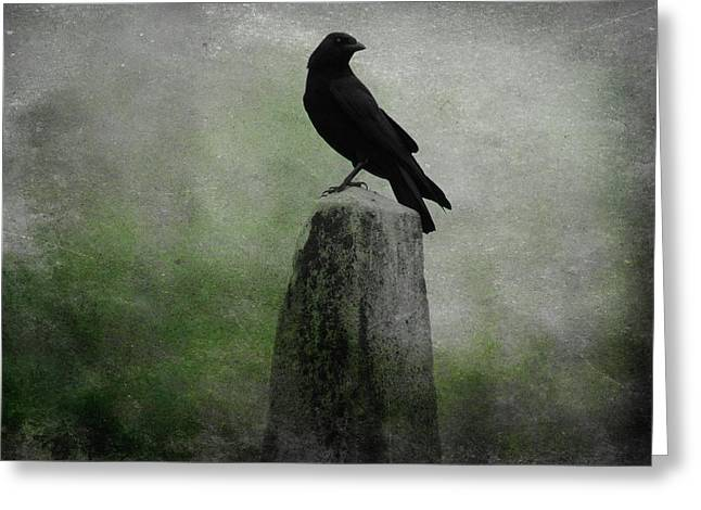 Raven In A Mist Of Green Greeting Card by Gothicrow Images