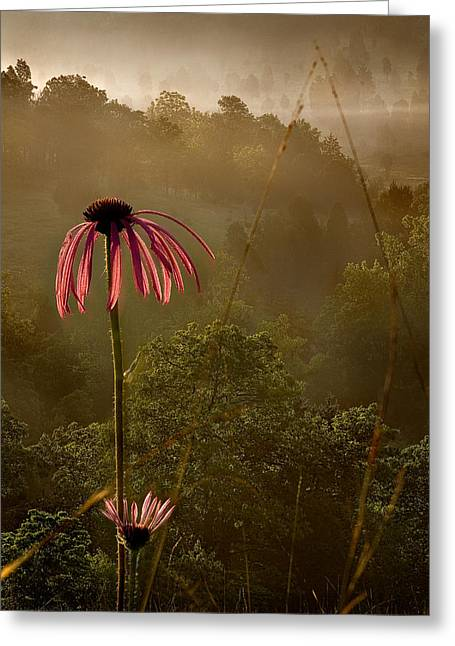 Mist On The Glade Greeting Card