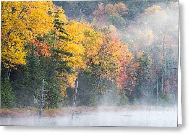 Mist Over Fly Pond Greeting Card