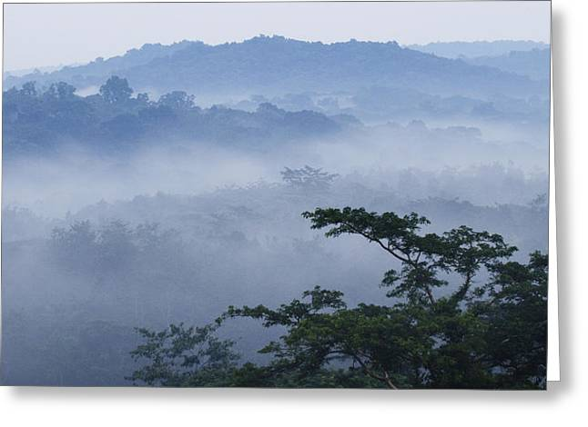 Mist Over Tropical Rainforest Kibale Np Greeting Card by Sebastian Kennerknecht