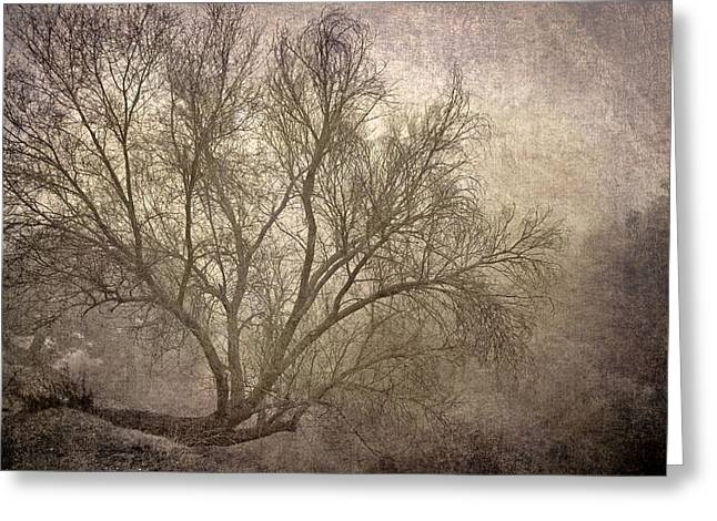 Mist Tree Greeting Card by Guido Montanes Castillo