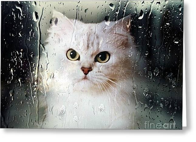 Mistletoe In The Window Greeting Card