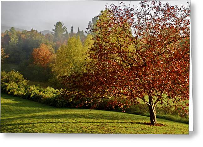 Greeting Card featuring the photograph Misty Autumn Morning by Alice Mainville
