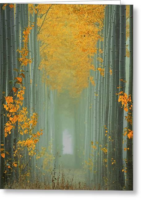 Misty Autumn Path Greeting Card