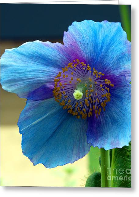 Misty Blue Greeting Card by Elizabeth Chevalier