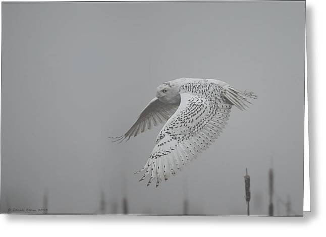 Misty Day Snowy Greeting Card