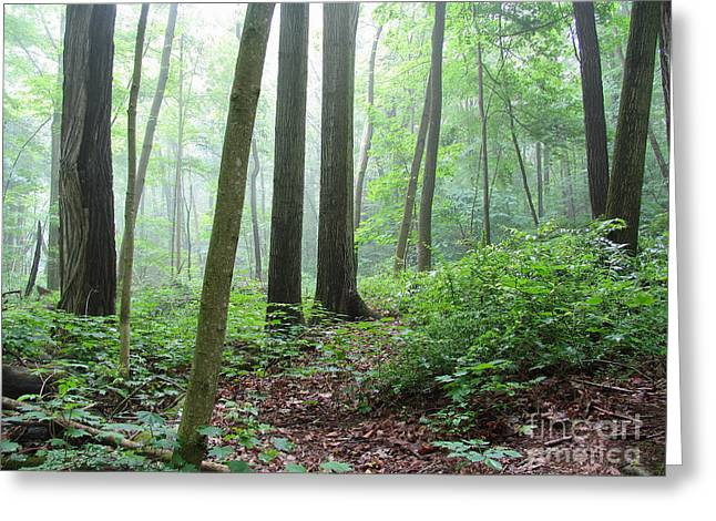 Misty Deep Forest Greeting Card by Kathi Mirto
