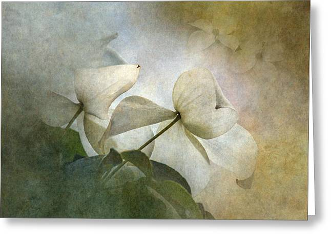 Misty Dogwood Greeting Card by Angie Vogel