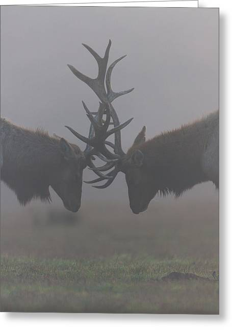 Misty Encounter Greeting Card