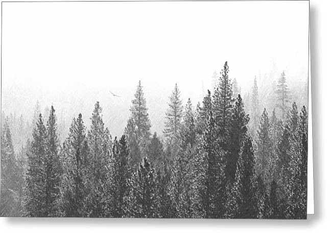 Misty Flight In The Forest Greeting Card by Frank Wilson
