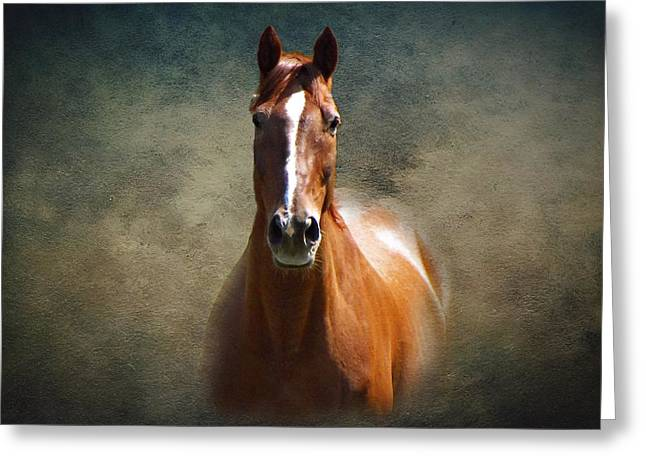Misty In The Moonlight Greeting Card by David Dehner