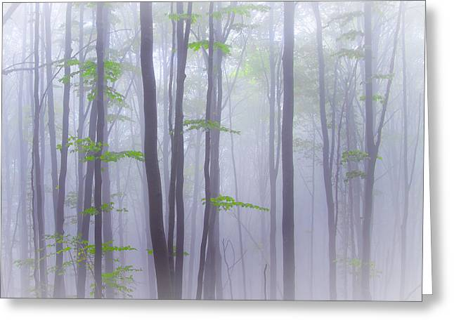 Misty Greeting Card by Michel Manzoni
