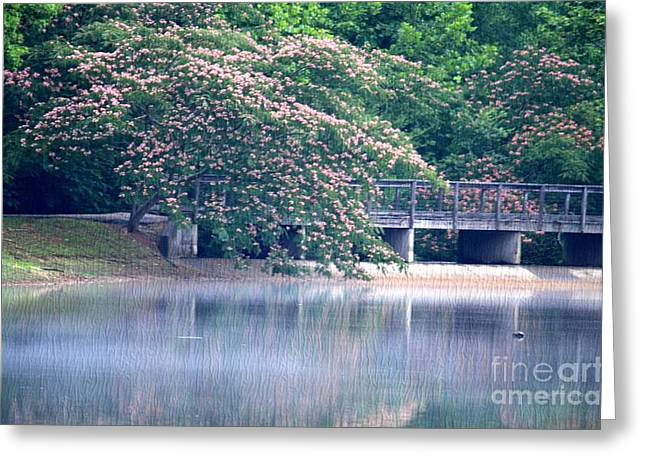 Misty Mimosa Reflections Greeting Card by Maria Urso