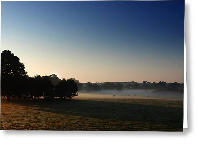 Misty Morn Greeting Card by Mark Rogan