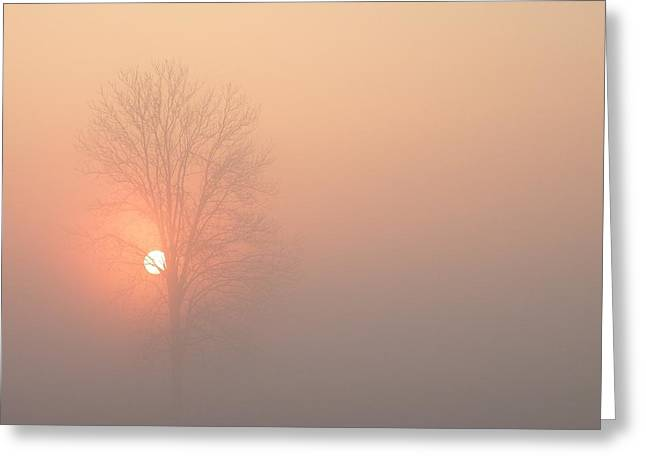Greeting Card featuring the photograph Misty Morning by Carlee Ojeda