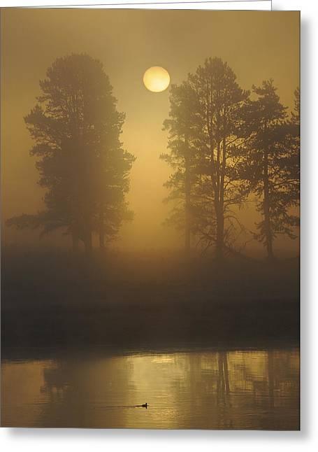 Misty Morning I Greeting Card by Sandy Sisti