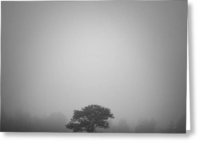 Misty Morning Greeting Card by Patrick Downey
