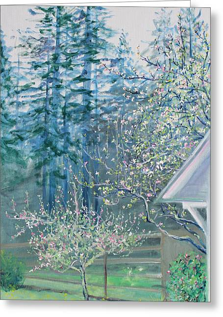 Misty Morning With Apple Blossoms And Redwoods Greeting Card by Asha Carolyn Young