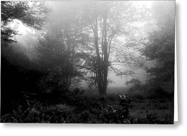 Misty Morning With Tree Silhouettes Greeting Card by A Gurmankin