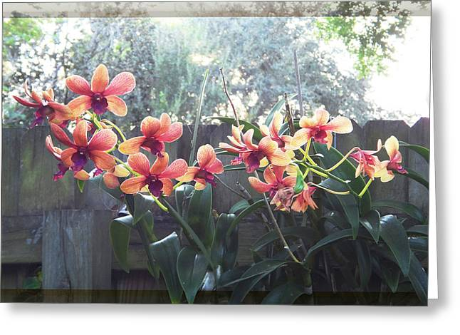 Misty Orchids Greeting Card