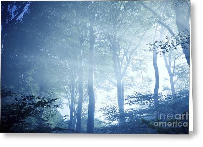 Misty Rays Of Light Pass Through Forest Greeting Card