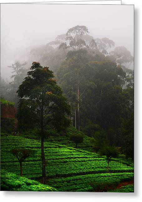 Misty Tea Plantations In Nuwara Eliya  Greeting Card by Jenny Rainbow