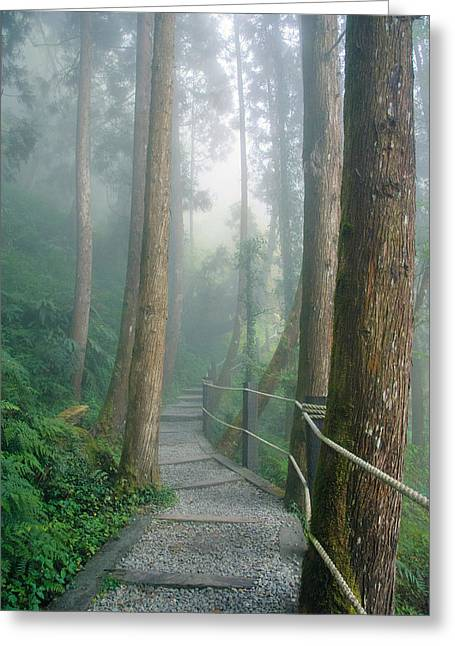 Misty Trail Greeting Card