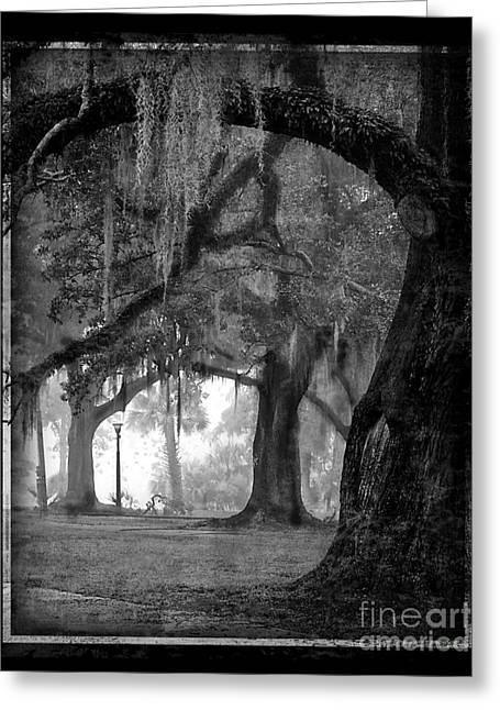 Misty Walk Through The Oak Trees Greeting Card