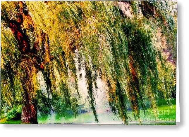 Misty Weeping Willow Tree Dreams Greeting Card