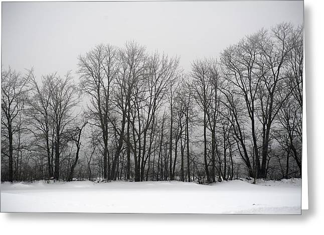 Misty Winter Day Greeting Card by Elaine Mikkelstrup