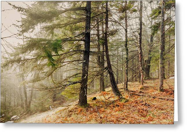 Misty Woodland Greeting Card by Robert Clifford