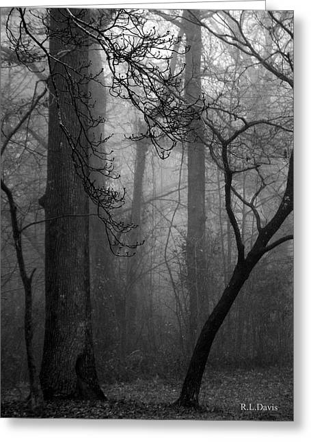 Misty Woods Greeting Card by Rebecca Davis